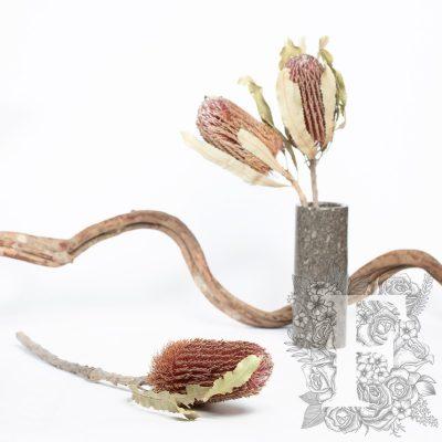 Banksia Menziesii - Stem