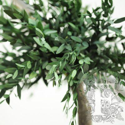 Jumbo Parvifolia
