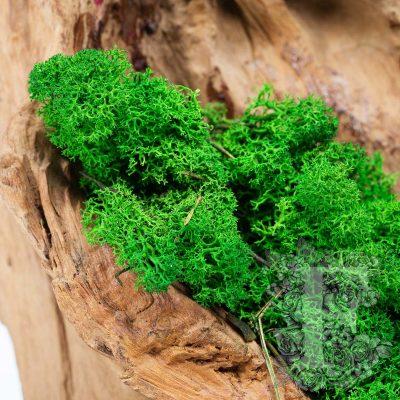 Premium Icelandic Lichen Moss - 1 Kg
