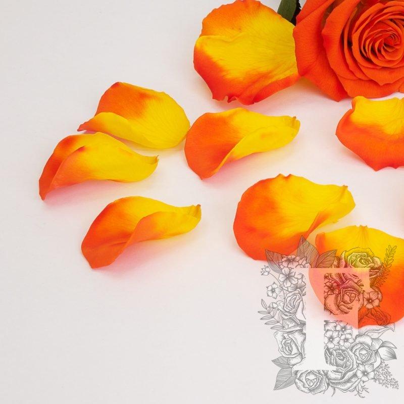 Bi-Colour Orange