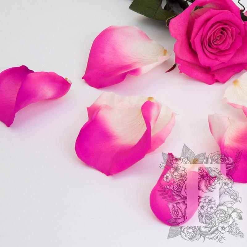 Bi-Colour Pink