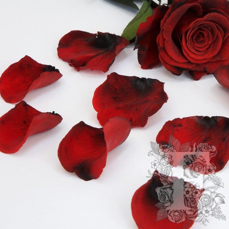 Bi-Colour Red