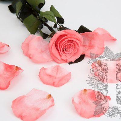Premium Rose Petals - Window Box - 100 g
