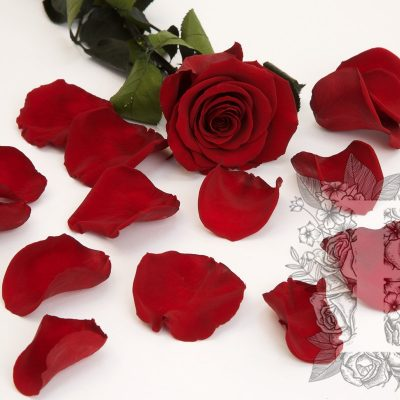 Premium Rose Petals - Bulk - 1KG