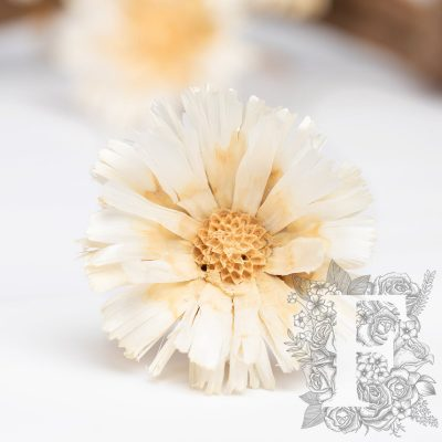 Protea Geschnitten - 3 Stems