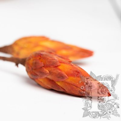 Protea Repens - 3 Stems