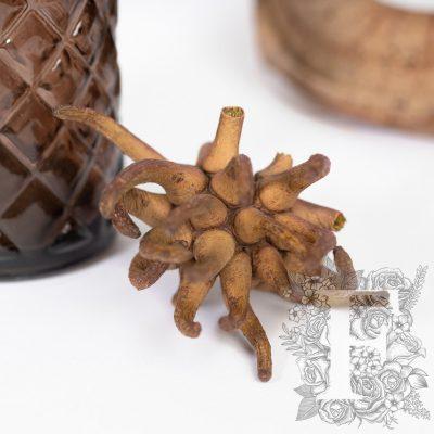Spidergum Claw - 3 Heads