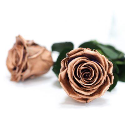 RoseAmor - L Roses - 6 Heads