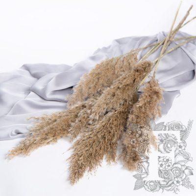 Pampas - Cane Aroundo - 10 Stems 100cm