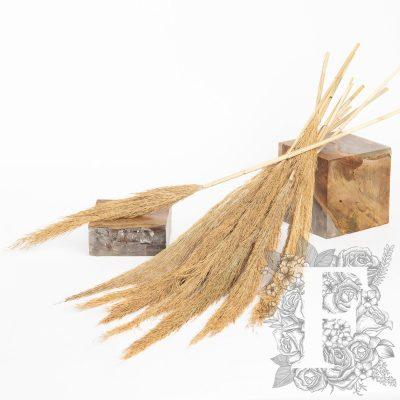 Pampas - Classic - Cana plumosa - 10 stems - Bunch