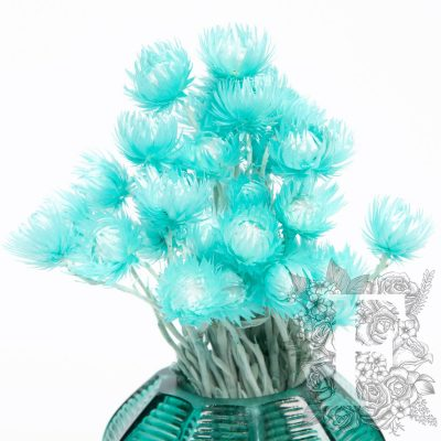 Cape flower - Everlasting - Bunch