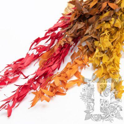 Premium Ruscus - autumnal - Bunch